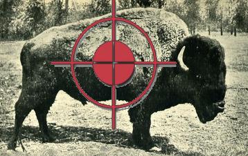 buffalosight