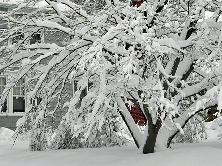 Princeton_Snow_12711_068
